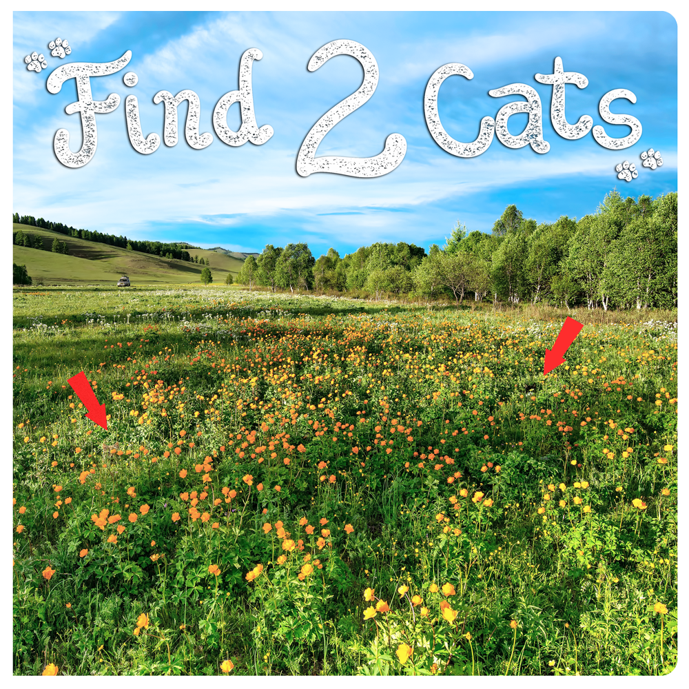 Find-2-Cats-Cover